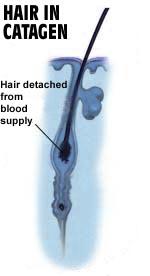 שיער בשלב קטאגן